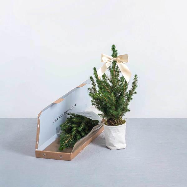 The drew Christmas tree
